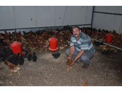 Fındık Üreticisi Artık Yumurta Üretiyor