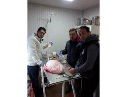 Yaralı Flamingoya Belediye Şefkati