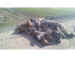 Yenişehir'de Köpek Katliamı