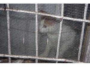 15 Gün Boyunca Evde Aç Kalan Kedi Operasyonla Kurtarıldı
