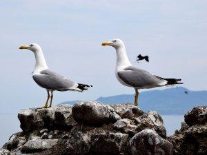 Giresun Adası'nın Konukları Geldi