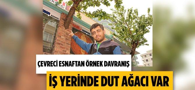Samsun'da Duyarlı Esnaf İş Yerinde Dut Ağacı Besliyor