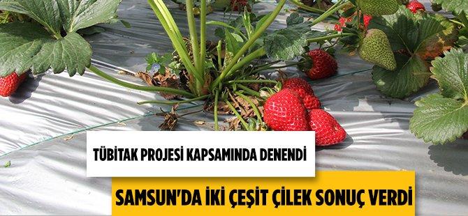 Samsun'da TÜBİTAK Projesi Kapsamında İki Çeşit Çilekten İyi Sonuç Alındı