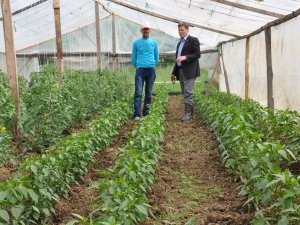 Samsun 19 Mayıs'ta Tarım Çeşitliliği Artıyor