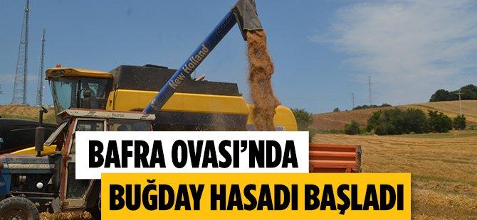 Samsun Bafra Ovası'nda Buğday Hasadı Başladı