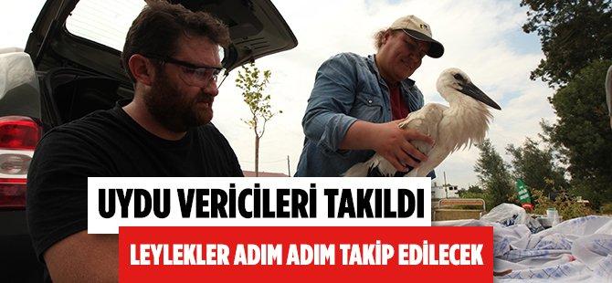 Samsun'da Leylekler Uydu Vericisi İle Adım Adım Takip Edilecek