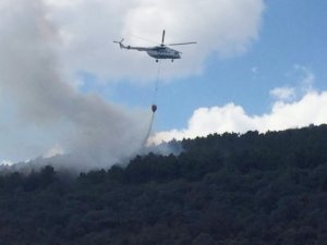 İstanbul'da Ormanlık Alanda Yangın
