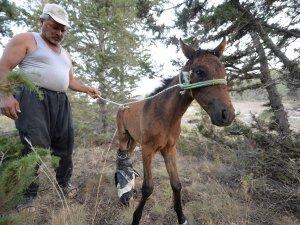 Antalya'da Atları Katlettiler