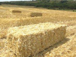 Samsun'da Çiftçiler Saman İsrafı Konusunda Uyarıldı