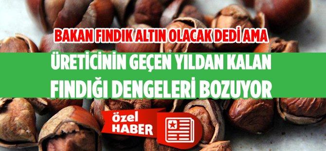 Fındık Altın mı Olacak? Yoksa Avrupa Türkiye'ye Alternatif mi Bulacak?