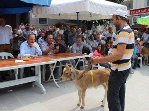 Sinop'ta Tarihi Türkeli Panayırı Plaj Şenlikleri Ve Bal Festivali