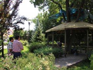 Samsun'da Ağacı Kesmemek İçin Kamelyayı Etrafına Yaptılar