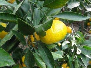 Rusya'ya Yaş Sebze Ve Meyve İhracatı Düştü