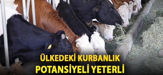 """Samsun Kırmızı Et Üreticileri Birliği Başkanı Doğan: """" Kurbanlık Popülasyonumuz Yeterli Derecede Var"""""""