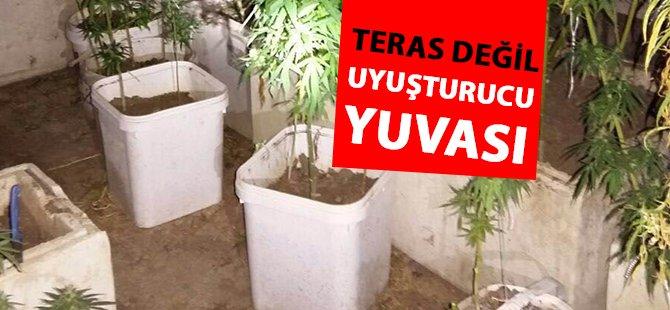 Samsun'da 776 Gram Kubar Esrar İle 121 Kök Hint Keneviri Ele Geçirildi