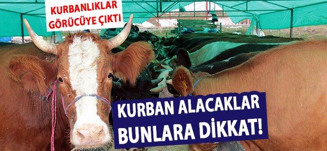 Samsun'da Kurbanlıklar Görücüye Çıktı