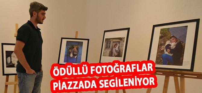 """""""Hayvan Hakları Kareleri"""" Fotoğraf Yarışmasının Ödüllü Fotoğrafları Piazza'da Sergileniyor"""