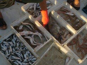 Marmara Ve Kuzey Ege Denizi'nde Kirlilik İncelemeleri
