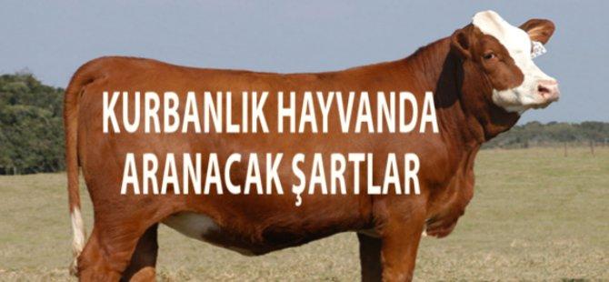 İslam'a Göre Bir Hayvanın Kurban Olabilmesinin Şartları