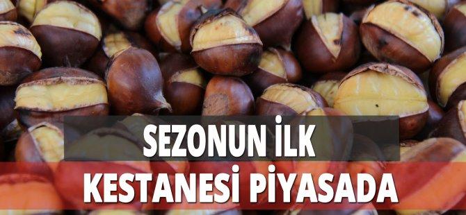 Sezonun İlk Kestanesi Samsun'da Piyasaya Çıktı