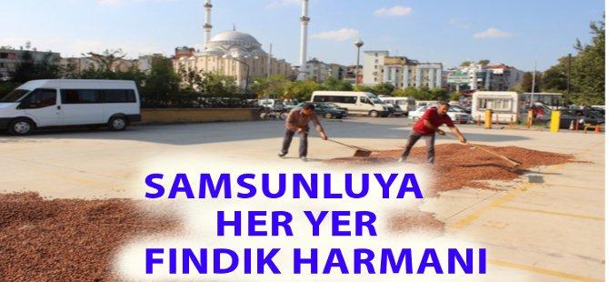 Samsun'da Her Yer Fındık Harmanı