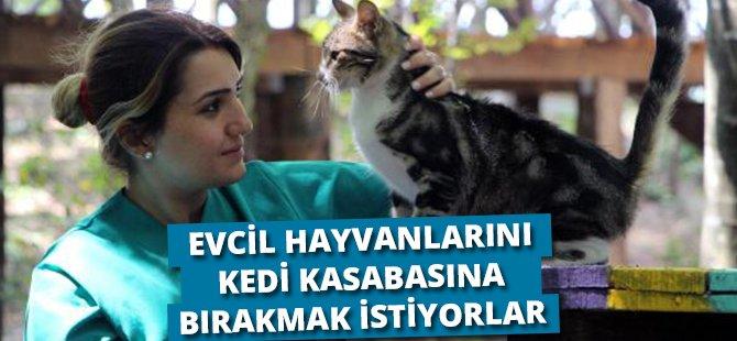 Samsun'da 'Kedi Kasabası'na Evcil Kedilerini De Getirmek İstiyorlar