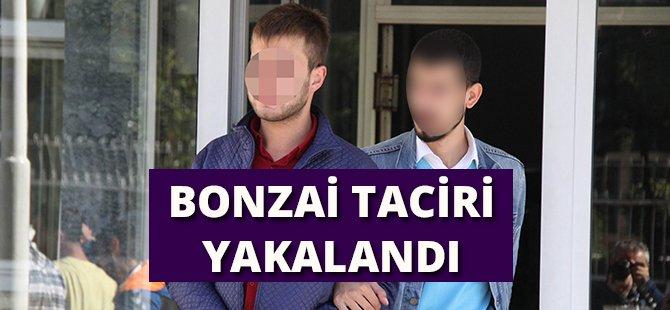 Samsun'da Bonzai Taciri Yakalandı