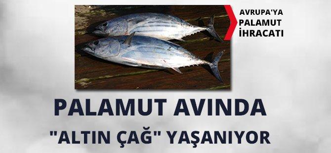 """Samsun-Sinop Su Ürünleri Bölge Başkanı Kıyak, """"Palamut Avında """"Altın Çağ"""" Yaşanıyor"""""""