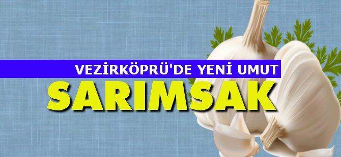 AK Parti Samsun Milletvekili Hasan Basri Kurt Vezirköprü Çiftçisi İçin Sarımsağı Gündeme Getirdi