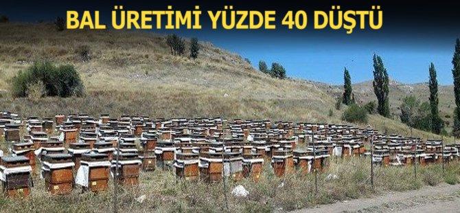 Samsun'da Bal Üretimi Yüzde 40 Düştü