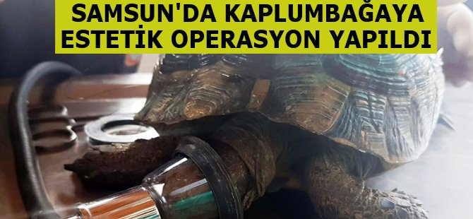 Samsun'da Yaralı Kaplumbağaya Estetik Operasyon
