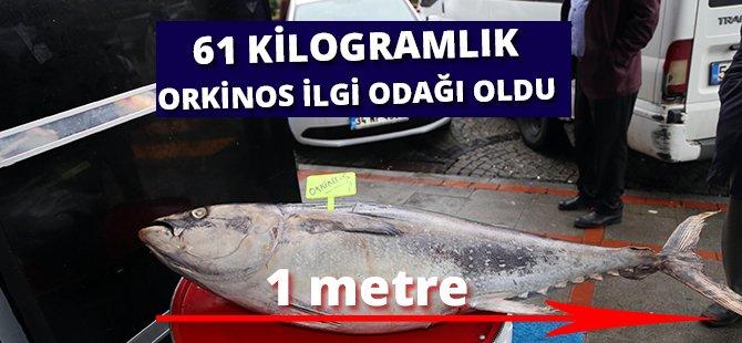 Samsun'da 61 Kilogramlık Orkinos İlgi Odağı Oldu