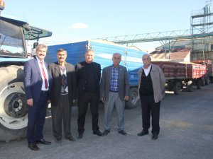 Samsun'un Bafra İlçesinde TMO Çeltik Alımlarına Başladı