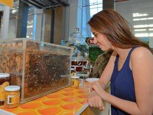 """EXPO 2016 Antalya'da """"Sokmayan Arılar"""" İlgi Görüyor"""