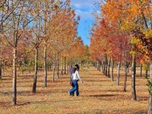 İzmir Kent Ormanı'nda Sonbahar Renkleri