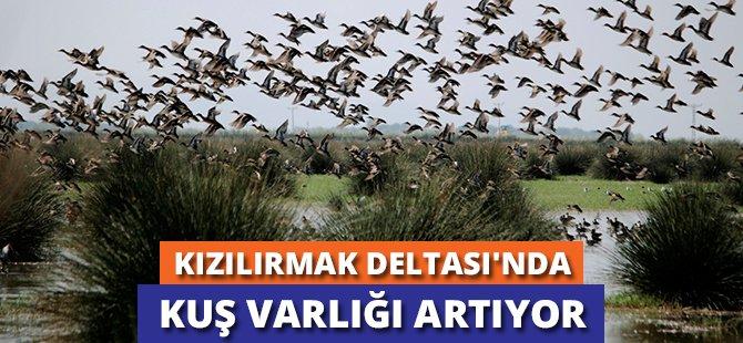 Samsun Kızılırmak Deltası'nda Kuş Varlığı Artıyor