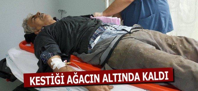 Samsun'da Kestiği Ağacın Altında Kalan Şahıs Ağır Yaralandı
