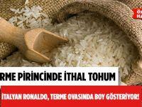 Samsun'un Meşhur Terme Pirincinin Tohumu İthal