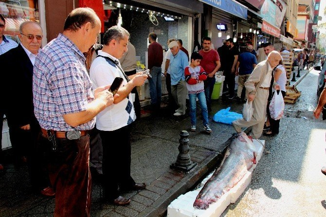 183 Santim Uzunluğunda Ve 152 Kiloluk Dev Yayın Balığı