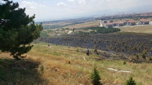 Amasya'da Orman Yangını