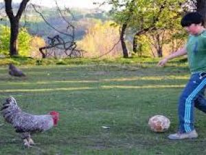 Futbol Dehası 'Horozoviç'